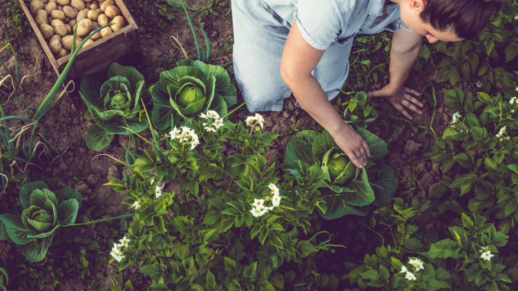 NEW Size – Same Price Garden Plots