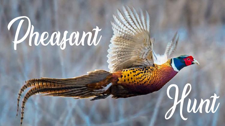 2020 Pheasant Hunt